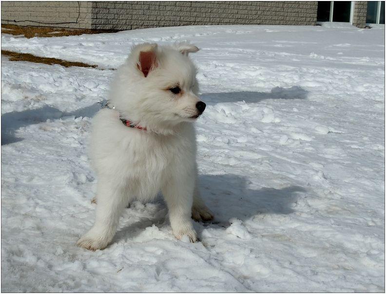 Un adorable petit chien - Jeux d animaux trop mignon ...